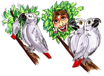 cartoon African Grey pair, homey with tray of cookies