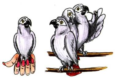 cartoon Do hand-reared African Greys make good breeders?