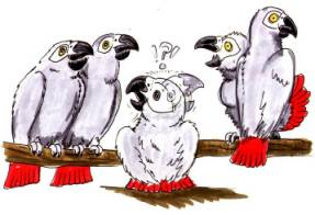 cartoon Grey chicks, is it nature or nurture?