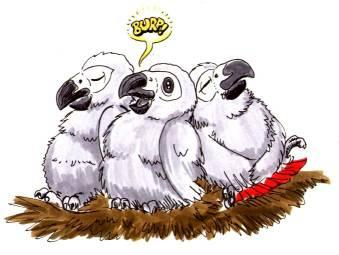 cartoon well fed African Grey chicks burping