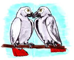 cartoon neighbor African Greys nose to nose confrontation