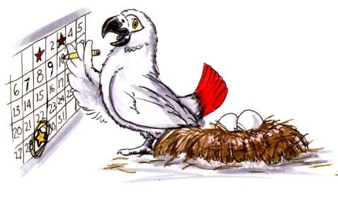 cartoon African Grey parrot marking a calendar